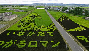 photo of rice paddy from Pink Tentacle