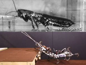 still image from cockroach robot