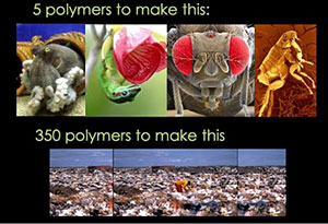 image from Janine Benyus' TED Conference talk on biomimicry