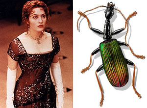 Kate Winslet and the ground beetle named after her