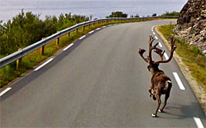 caribou caught in Google street view